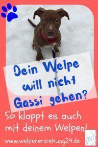 Welpe Will Nicht Gassi Gehen Welpen Welpenerziehung Hunde