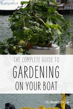 Yes, you can grow greens and herbs (and even tomatoes!) on your sailboat. Check out this clever DIY to help you make your own boat garden.