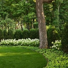 Traditional Landscape Design, Pictures, Remodel, Decor and Ideas - page 19