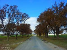 #Tree way, in Soon Valley, #Pakistan