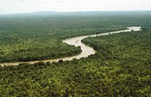 Rainforests are an example of biodiversity on the planet and typically possess a great deal of species diversity. This is the Gambia River in Senegals Niokolo-Koba National Park.