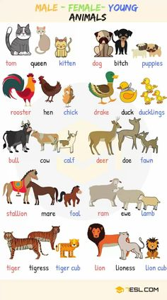Baby Animal Names! What are the names of baby animals and their parents in English? Learn these young, male and female animal names with ESL pictures to increase your vocabulary words in English. English Verbs, Learn English Grammar, English Writing Skills, English Vocabulary Words, English Phrases, English Posters, Learning English For Kids, English Lessons For Kids, Kids English