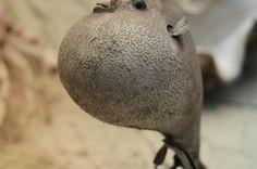 #Travel #tour #Darwin Museum (135)