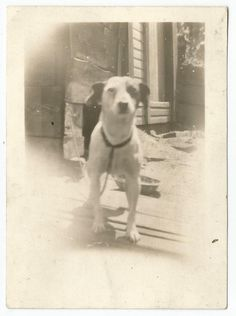 BLACK EYED DOG @ COOP w/FEED BOWL OLD/VINTAGE PHOTO-SNAPSHOT M832