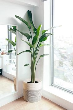 House Plants Decor, Plant Decor, Big House Plants, Bedroom Plants, Bedroom Decor, Bedroom Ideas, Bedroom Furniture, Decor Room, Ikea Bedroom