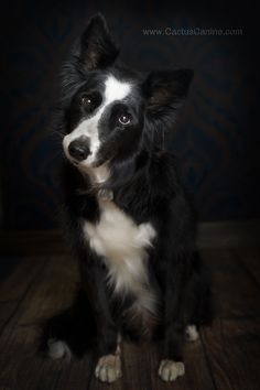 Nothing like a Border Collie head tilt!