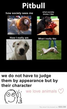 Hate the deed, not the breed. Better yet, Hate the people who encourage this aweful behavior. Dogs just want unconditonal love and will do whatever thier owners ask. Pitbulls are so sweet and awesome!!!