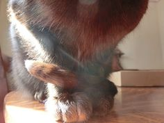 Zulu warming his toes in a sunpuddle. #InstaTags4Likes #cat #cats #kitten #kittens #catsagram #catstagram #instagood #pet #pets #animal #animals #petstagram #petsagram #photooftheday #catsofinstagram #ilovemycat #instagramcats #catoftheday #caturday #lovecats #lovekittens #adorable #catlover #instacat #monday #oriental #tw #pin