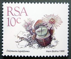 Succulents on Stamps: Didymaotus lapidiformis, South Africa, 1988 | World of Succulents