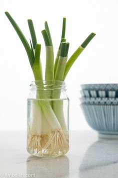 Did you know that you could grow onions or leek in a jar? We love this alternative garderning idea!