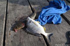 Pêche à Parsley Bay