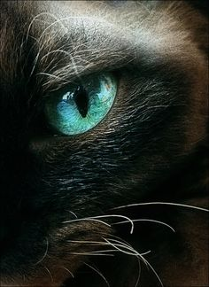 cat's eye....