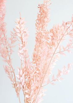 Give your dried floral arrangements color with this dyed and preserved ruscus in pink, available now at Afloral. Rose Gold Aesthetic, Baby Pink Aesthetic, Flower Aesthetic, Aesthetic Collage, Simple Aesthetic, Kpop Aesthetic, Aesthetic Photo, Peach Walls, Pink Walls