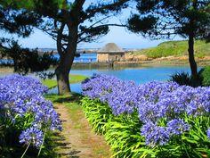 © Fotolia / Allée fleurie #Bretagne