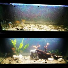 Avant et après entretien Aquariums, Freshwater Aquarium, Interview, Tanked Aquariums, Fish Tanks