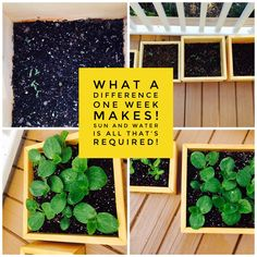 Grow your own garden right in our Planter Box! Choose your seed!
