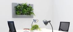 Vertical Garden Systems, Live Picture, Black Office, Garden Shop, Self Watering, Water Systems, Can Design, Green Plants, Indoor