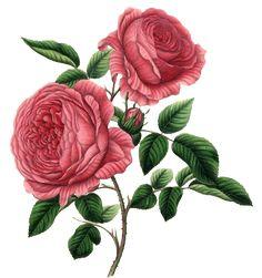 Цветы,фрукты, ягоды. Элементы для творчества -2. Старинные.: ♥ Creative NN. Блог Альбины Рассеиной. ♥