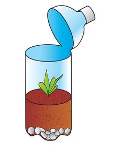 Image result for soda bottle terrarium