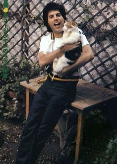celebrities and their cats | Freddie Mercury #cats #famouscats #FreddieMercury