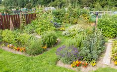 Potager gardens were invented in France as ornamental kitchen gardens. They combine fruit and veg crops with flowers and herbs to enhance the beauty of the space. The idea is to