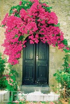 Share on Tumblr  Bougainvillea growing over the doorway of a house, Rhodes, Greece