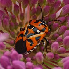 Bugs that will try to eat your vegetable garden