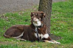 A következő szabályok betartásával kutyánk betanítása sokkal könyebben megy majd.