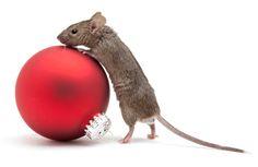 House_Mouse_Christmas
