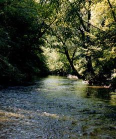 Nottely River Campground.  Nottely River