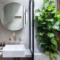 Bathrooms are a great place to keep many types of indoor plant due to the moisture in the air, as long as you have enough natural light