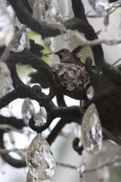 Hummingbird nest in outdoor chandelier! Rooted In Thyme