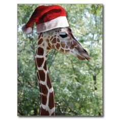 giraffe in a Santa Hat #giraffes #christmas #santa-hats gifts