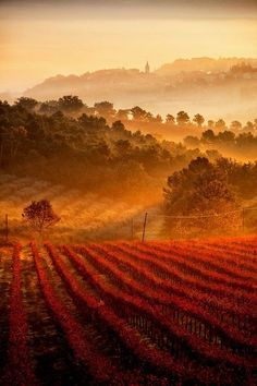 Ah, Italia! Fog over vineyards in Castel Ritaldi, Umbria, Italy. Places To Travel, Places To See, Places Around The World, Around The Worlds, Beautiful World, Beautiful Places, Beautiful Scenery, Simply Beautiful, Umbria Italia