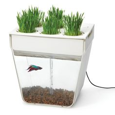 This fish bowl / planter is the embodiment of a symbiotic relationship that brings new meaning to fish food. The plants growing in the top tray thrive on the nutritious water below, while the plant roots purifies the water for the fish living below. This would be a fabulous planter to grow herbs in, and a fun project to do with kids.