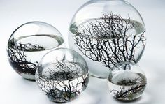 The amazing EcoSphere is the original self contained aquatic ecosystem. Enclosed in glass, this miniature ecosystem is self sustaining with the perfect balance of animal and plant life. Sold at puremodern.