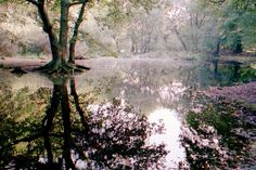 so amazing. so serene. so beautiful elle / everything reminds me of you / 35mm film / hampstead heath