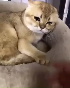 You can't touch me unless you give me money 🤣🤣 - Katzen - Gatos Funny Animal Videos, Cute Funny Animals, Funny Animal Pictures, Animal Memes, Cute Baby Animals, Funny Cats, Animal Quotes, Weird Cats, Grumpy Cats