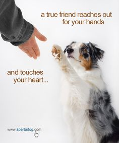 True friend #spartadog #dogs #quotes