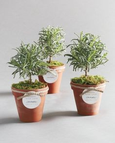 Potted lavender plants that resemble mini trees are fragrant and enchanting—and become even more personalized with a gift tag attached with braided twine.