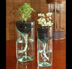 Cut glass wine bottles to make self-watering plants- amazing!