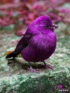 purple, bird, and nature image Kinds Of Birds, All Birds, Little Birds, Love Birds, Pretty Birds, Beautiful Birds, Animals Beautiful, Cute Animals, Animals Amazing