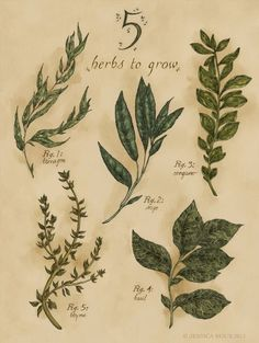 A lovely illustration of some of the easiest things to grow. And the best part, you don't have to wait until spring. Even in colder climates, a sunny window and adequate watering will give you herbs. Vintage Botanical Prints, Botanical Drawings, Botanical Art, Botanical Illustration, Illustration Art, Illustrations, Impressions Botaniques, Herb Garden Design, Herbs Garden