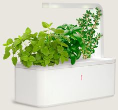 Click & Grow - grow flowers and kitchen herbs easily with a smart garden. Technology does all the work. Might be good for someone with a brown thumb.
