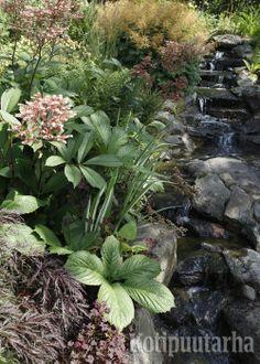 Puutarhan kosteat painanteet ovat hyviä luontaisia paikkoja vesiaiheelle. Maaperä antaa myös mahdollisuuden kokeilla kasveja jotka eivät viihdy kuin kosteilla mailla. www.kotipuutarha.fi