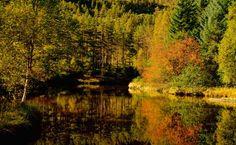 Metro Photo Challenge 2012, Daily Winner International 2012-09-23 -Autumn in the Norwegian woods