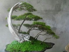 By Minh Hanh GORGEOUS!!! One day I want to grow a bonsai like this one! Más