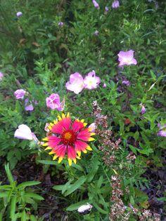 More wild flowers in my garden.