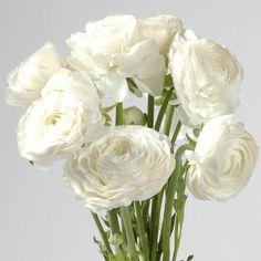 White Ranunculus Wedding Flowers 100 stems  #bouquets #centerpiece #flowers #bulkroses #mothersday #decor #weddingflowers #valentinesday #party #corsage