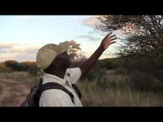 ▶ Weaver birds in the Okonjima Nature Reserve - YouTube